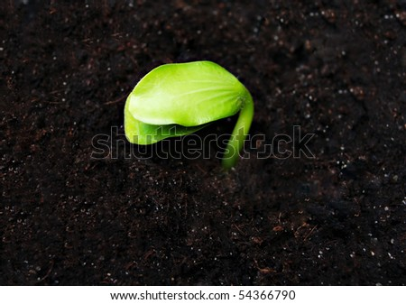 Green sprout in the ground, high resolution - stock photo