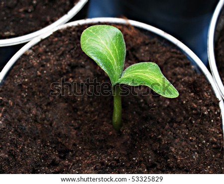 Green sprout in the pot, high resolution - stock photo