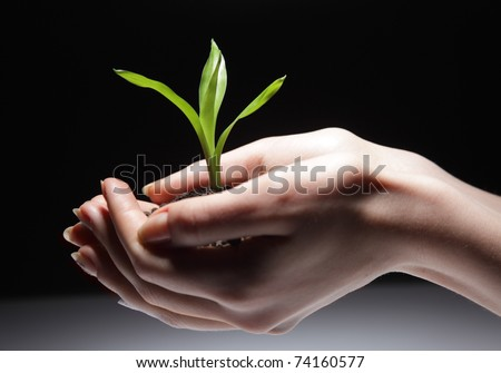 green sprout in woman hand - stock photo