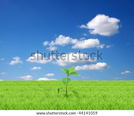Green sprout isolated  on a blue background - stock photo