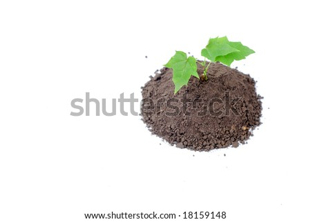 Green sprout of young tree in the ground