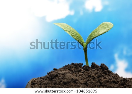 green sprout on sky background