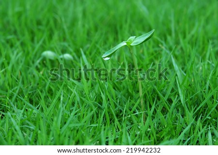 Green sprout with dew drop in nature - stock photo