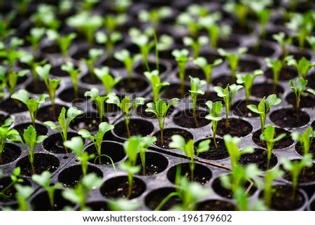 Green sprouts growing from pots - stock photo