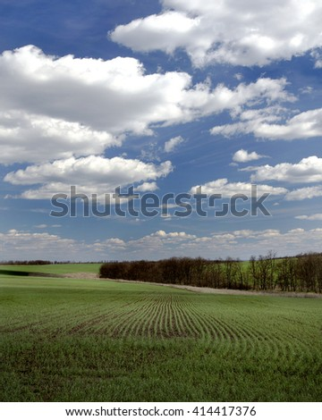 green sprouts on the field under blue sky with white clouds - stock photo