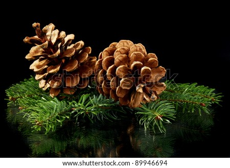 Green spruce branches and cones on black background. - stock photo