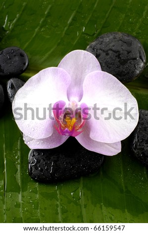 Green still life- white flower and zen stones with candle on banana leaf