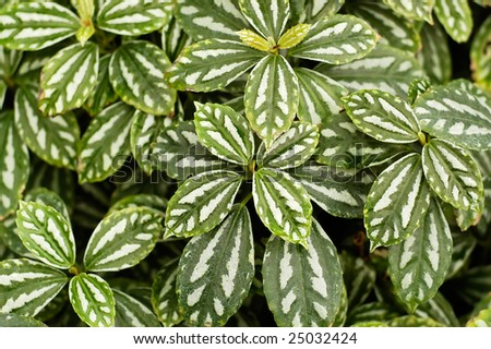 Green striped leaves background - stock photo