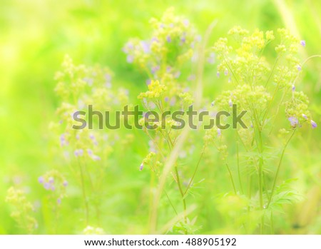 Green summer grass and tender flowers in field