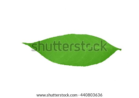 green summer leaf on the white background - stock photo