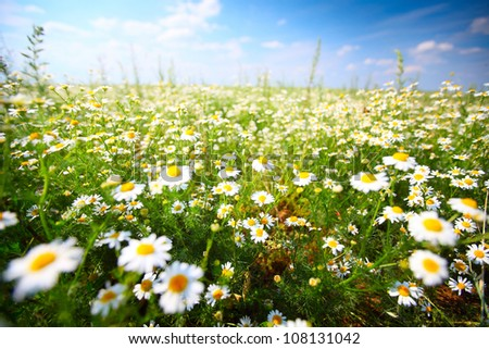 Green summer meadow with flowers and herbs - stock photo