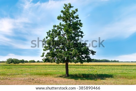 Green summer meadow with herbs and big oak tree. - stock photo