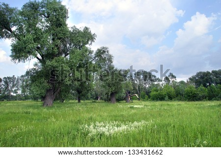 green summer meadow with large old trees - stock photo