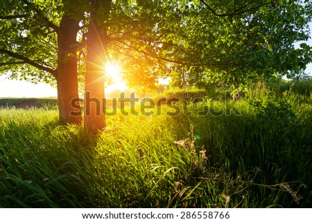 Green summer meadow with trees at sunset. - stock photo