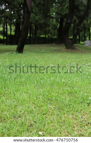 Green summer park landscape