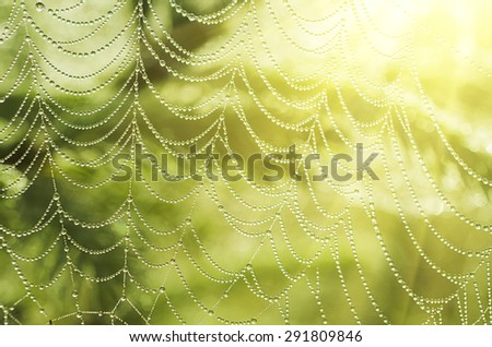Green summer plants with dew water drops and  shiny web, macro sunny background - stock photo