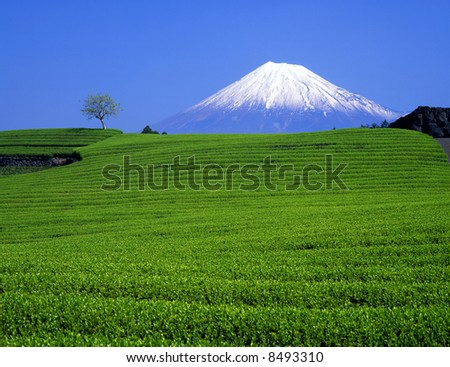 Green tea fields and Mount Fuji - stock photo