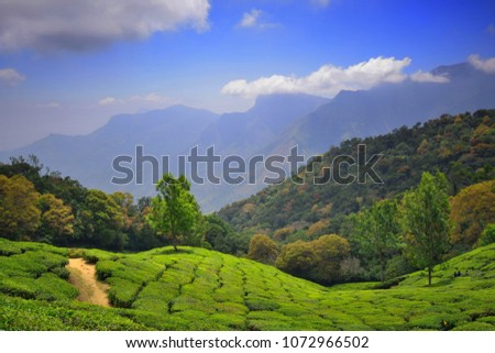 Green Tea Gardens Munnar Top Station Stock Photo (Safe to Use ...