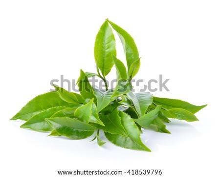 green tea leaf on white background - stock photo