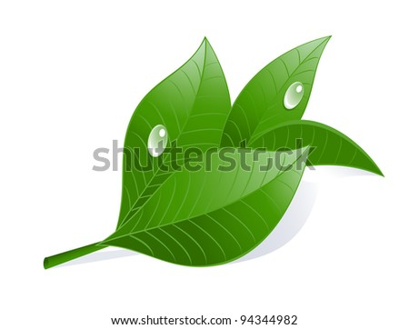 Green tea leaves with drops. - stock photo