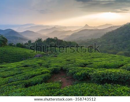 Green Tea plantations, Munnar, Kerala, India - stock photo
