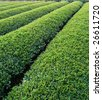 green tea tree garden - stock photo