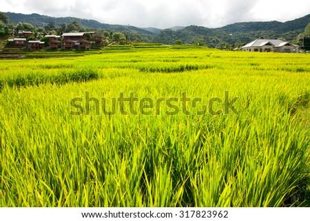 Green Terraced Rice Field in Chiangmai, Thailand - stock photo