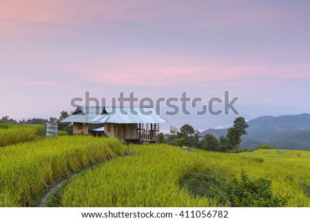 Green Terraced Rice Field in Chiangmai, Thailand - stock photo