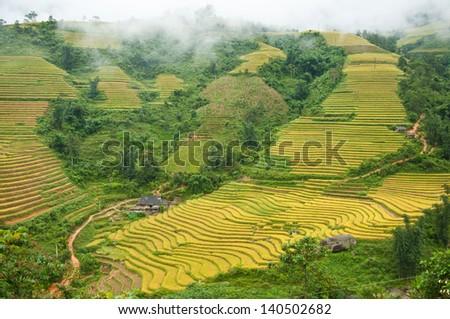 Green terraced rice field in Sapa, Vietnam. - stock photo