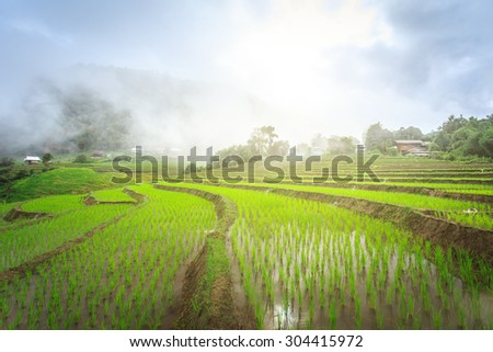green terraced rice field with fog in the morning at Chiangmai Thailand - stock photo