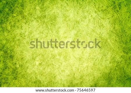 Green texture grass - stock photo