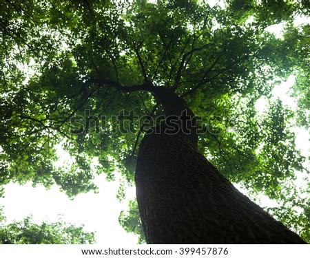 Green tree against the shiny sky background. - stock photo