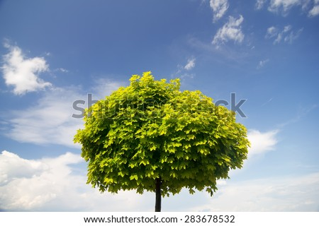green tree and blue sky, natural background - stock photo