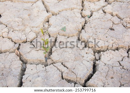 Green Tree and Dry soil in arid areas - stock photo