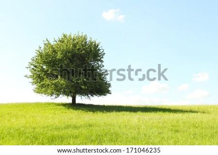 Srp Enterprises Weblog: Green Leafed Tree In Middle Of Field