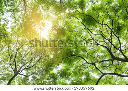 green tree in the forest