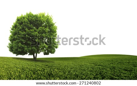 Green Tree isolated against a white background - stock photo