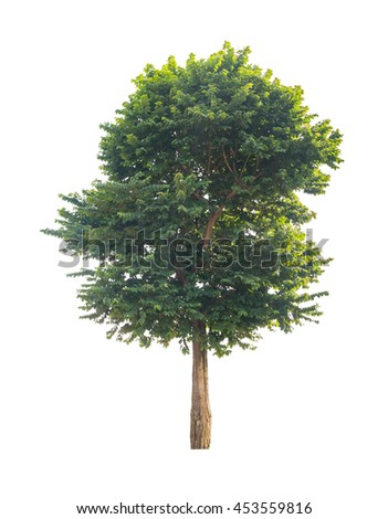 green tree isolated on white background with clipping path