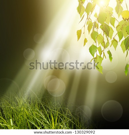 Green tree leafs at under sun rays - stock photo