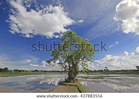 Green tree leaves in the farm with beautiful sky background.