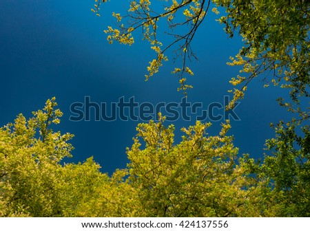 green tree leaves shining in the sun - stock photo