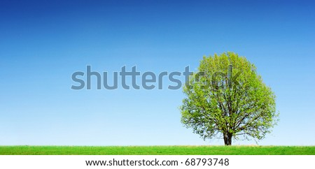 Green tree on meadow with green grass and clear blue sky