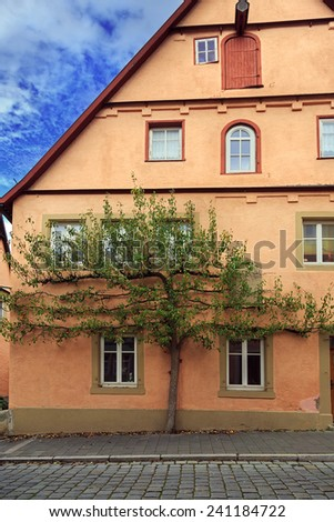 Green tree on the facade of house in Rothenburg, Germany  - stock photo