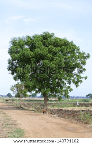 Green tree on the way over blue sky - stock photo