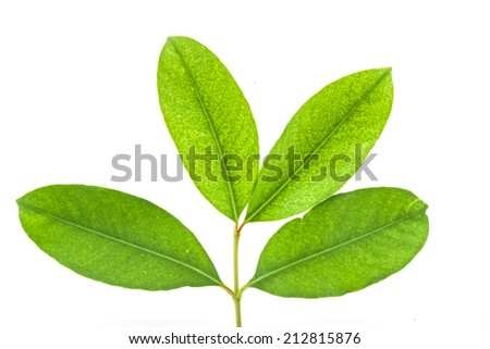 green tree on white background