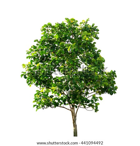 Green tree on white background - stock photo