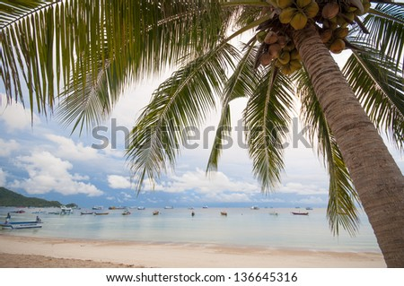 Green tree on white sand beach. Koh-Tao island, Chumporn, Thailand. - stock photo