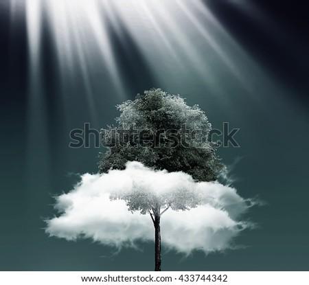 Green tree over the dark sky - stock photo