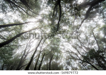 green tree rain forest in autumn season of thailand - stock photo