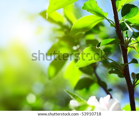 Green tree's leaves on stem in sunny day